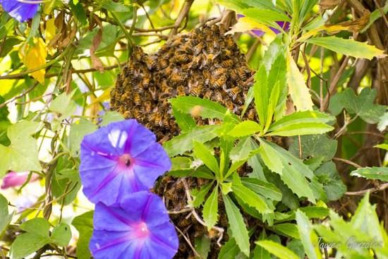 Enjambre de abejas/ Bee Swarm