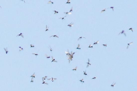 Enjambre de hormigas/ Ant Swarm