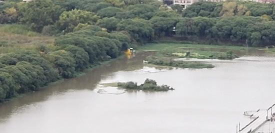 Coipos Brasil/Coypu Pond Brasil