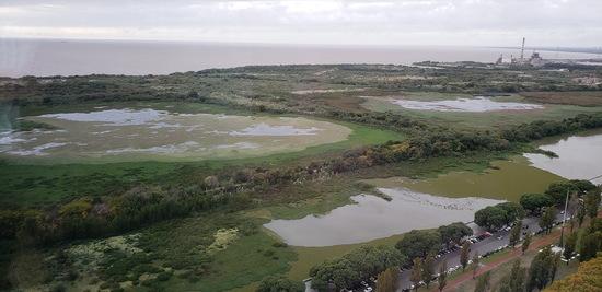 Coipos Viamonte/Coypu Pond Viamonte