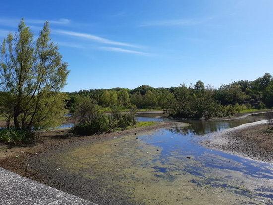 Laguna de los Coipos/Coypu Pond