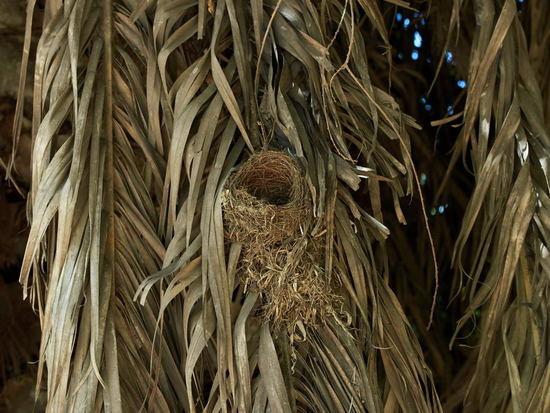 Nido/Nest