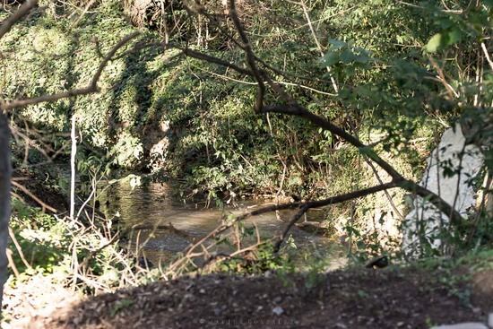 Agua en Coipos/Water in Coypu Pond