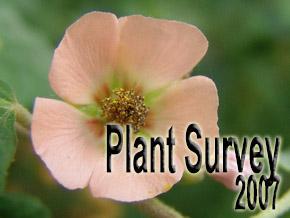 Plant survey 2007