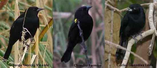 aves conflictivas copy
