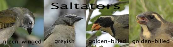 Saltators