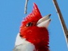 cardenal logo voz