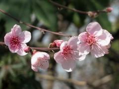 Signos de primavera/Signs of Spring