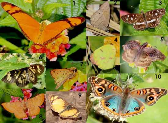 Mariposas/Butterflies