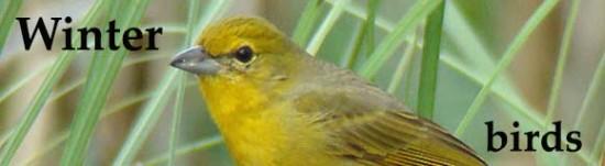 aves de invierno1a