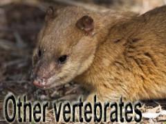 other vertebrates
