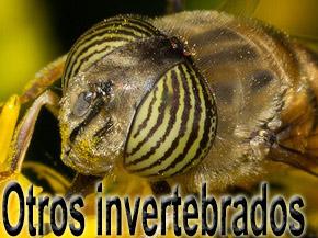 otros invertebrados