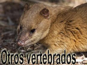 otros vertebrados