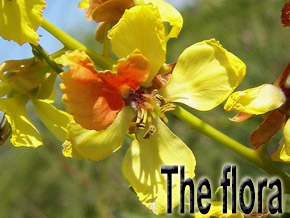 the flora