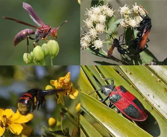 algunos-insectos-copy