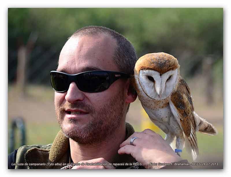 cautiverio, rehabilitación, ave, águila, halcón, jote, lechuza, RECS