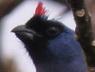 frutero azull