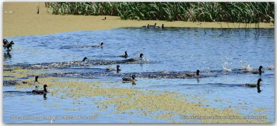 Acuáticas/Waterbirds