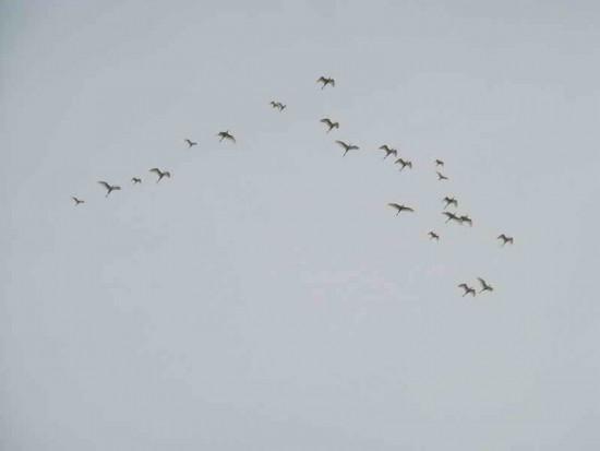 Garzas/Egrets