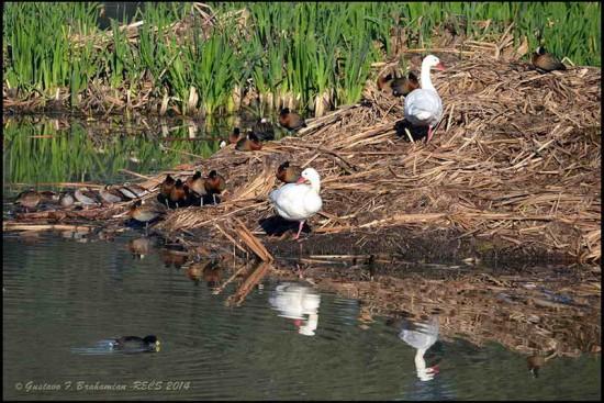 5 acuáticas/5 Waterbirds