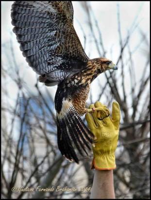 Liberación de aves/Bird Release