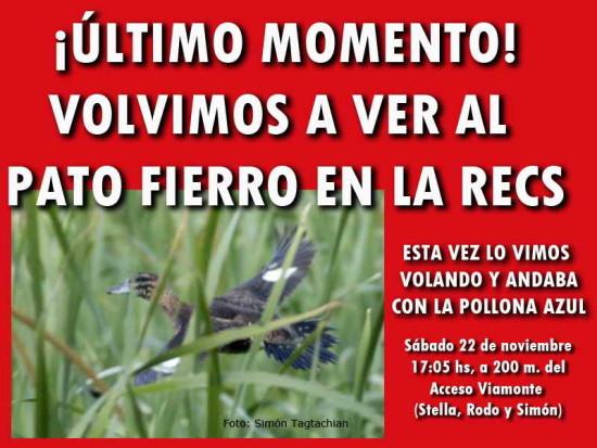 pato_fierro_placa_roja_2