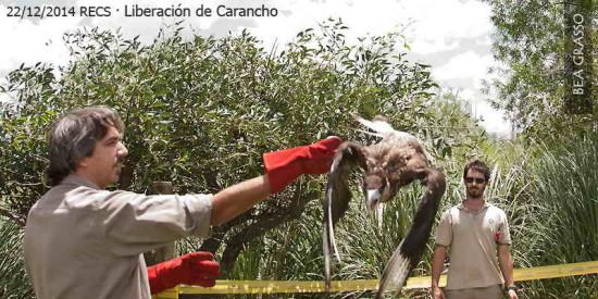 Carancho BGR 12 14