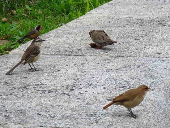 cuatro especies/four species