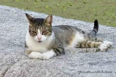 Gato/Cat