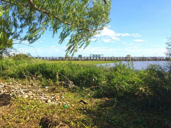 Camalotal/water hyacinth mats