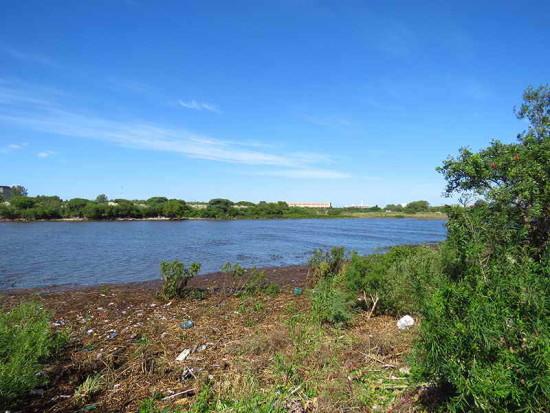 Río desde Camino de los Sauces/River from Willow Path