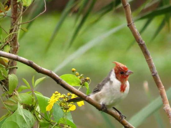 cardenal com SAG 9 4 16