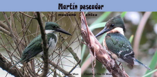 M. pesc chico y mediano/Green and Amazon K