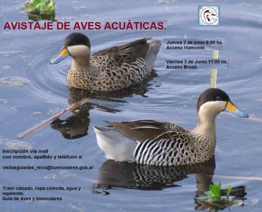 Salida/Bird walk