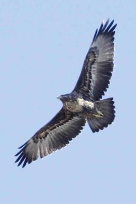 águila mora JST 9 8 16_2