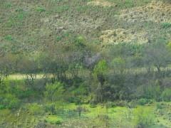 Camino Lagartos/Lizard Path