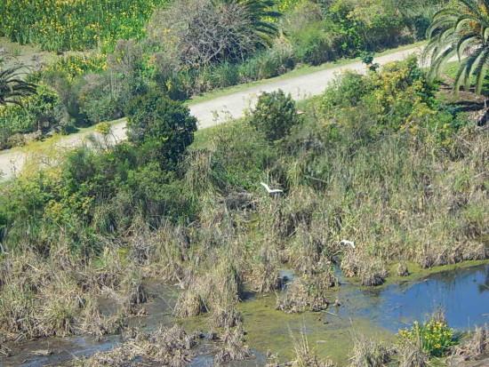 Camino de los Lagartos/Lizard Path