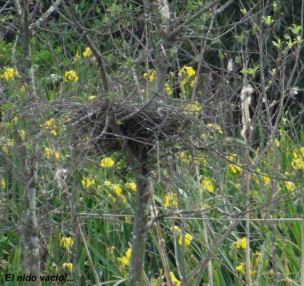 Nido Hocó/Heron's nest
