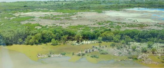 Coipos y Gaviotas/Coypu and Gull Ponds