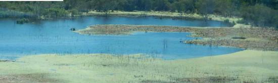 Gaviotas/Gull Pond