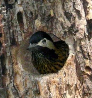 Historia de un nido