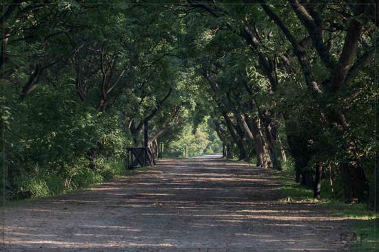 Camino de los Lagartos/Lizrd Path