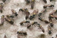Camuatí/Camuati Nest and wasp