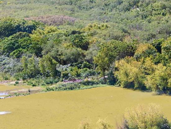 Coipos/Coypu Pond