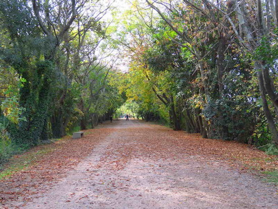 Otoño en eLagartos/Autumn along Lizard Path