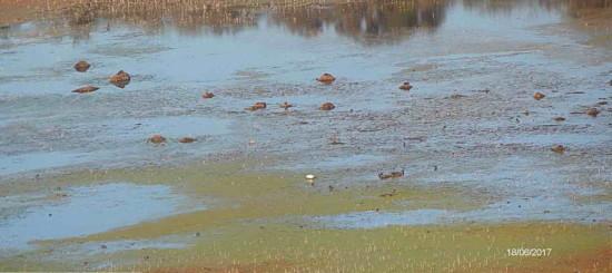Laguna Gaviotas/Gull Pond