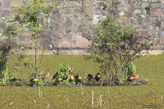 Acuáticas/Waterirds