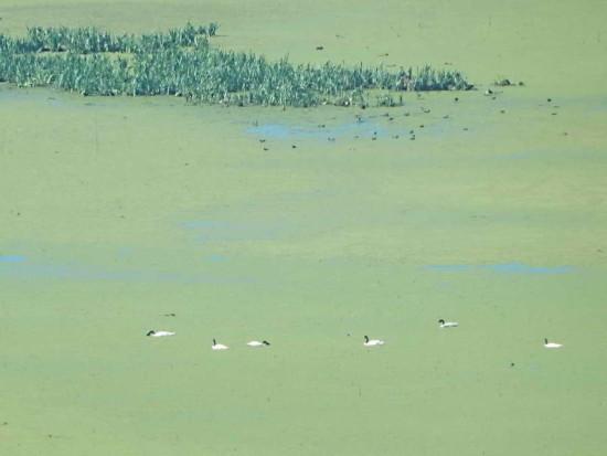 Lag Gaviotas/Gull Pond