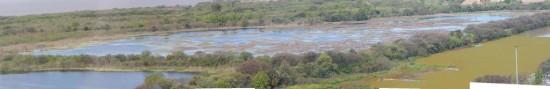 Laguna de los Patos7Duck Pond
