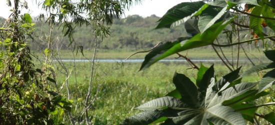 Laguna de las Gaviotas/Gull Pond